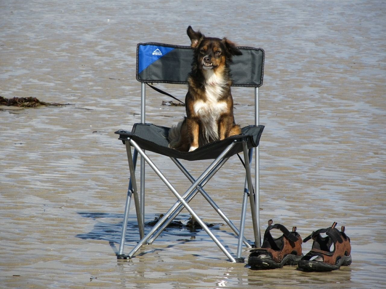 Dog on camping chair by the seaside.jpg