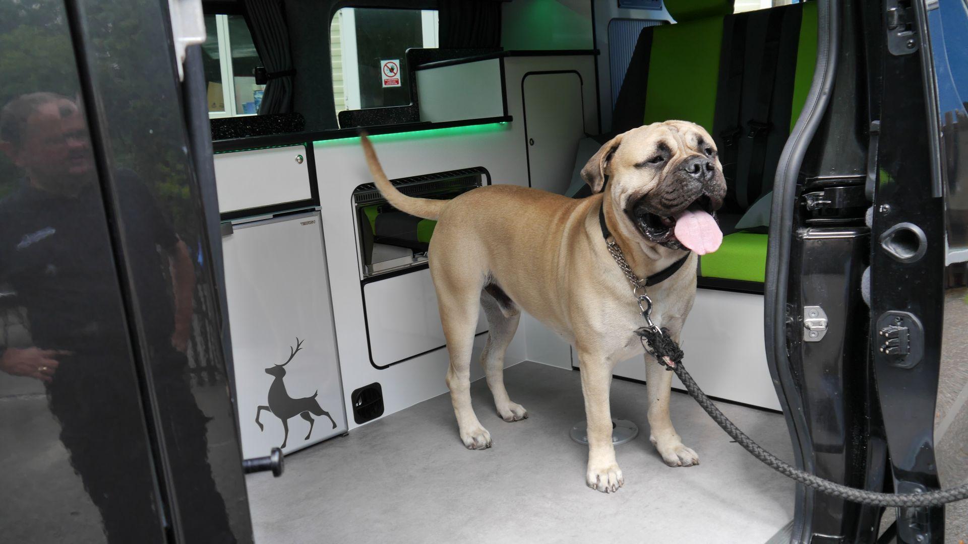 Dog friendly Sussex Campervans Manhattan Ben Mastiff.JPG