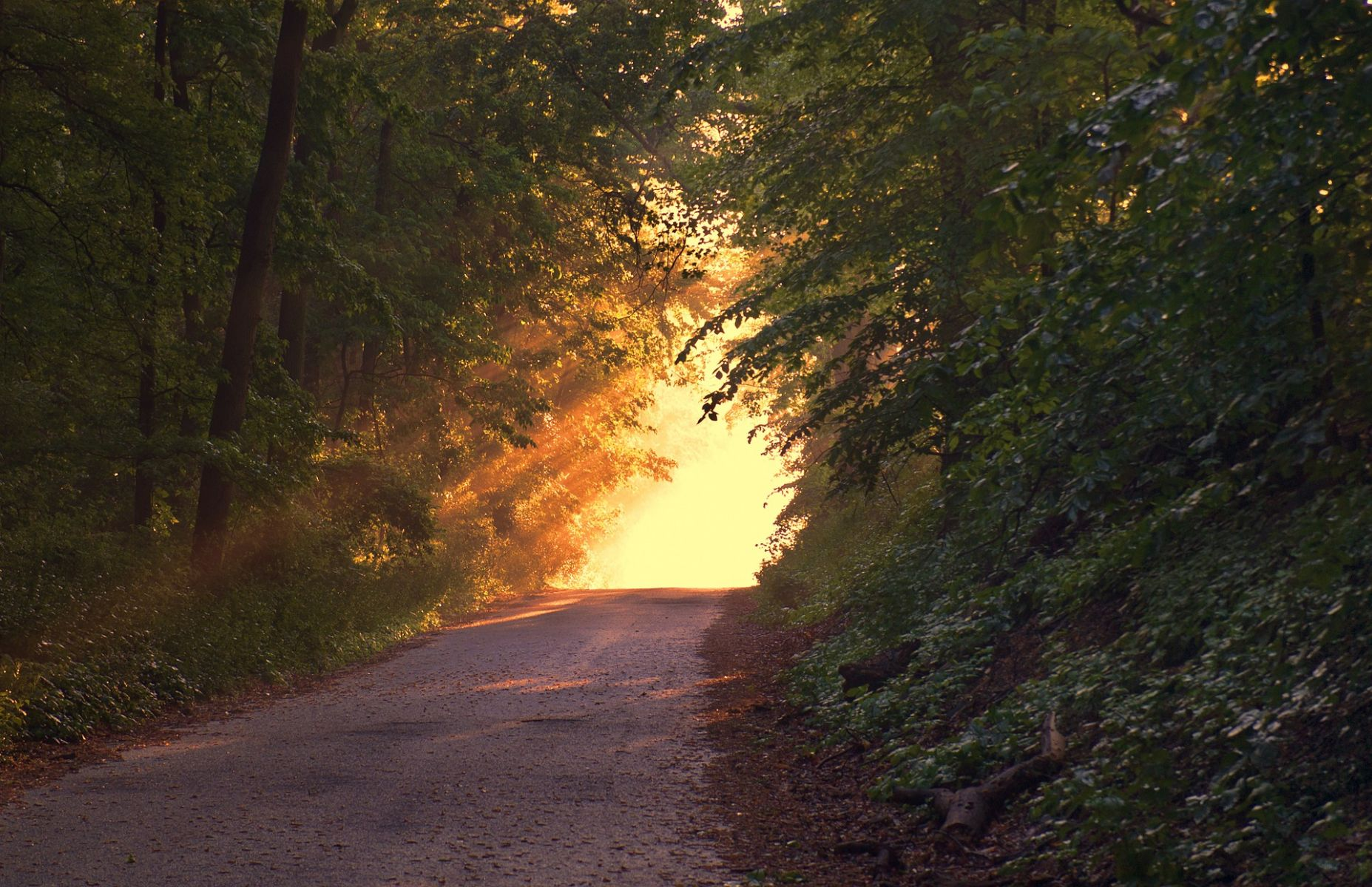 Sunlight countryside road.jpg