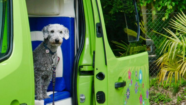Dogs Sussex Campervans Manhattan Ben puppy.JPG