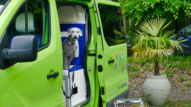 Sussex Campervans for sale camping with dogs Paradise campervan.JPEG